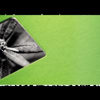 Album klasické FINE ART 36x32 cm, kiwi, bílé listy